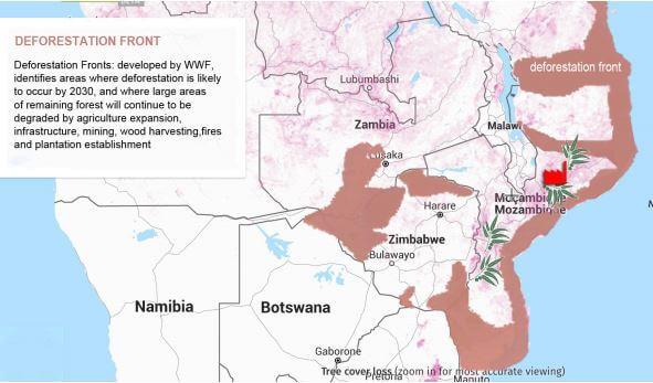 deforestazione mozambico